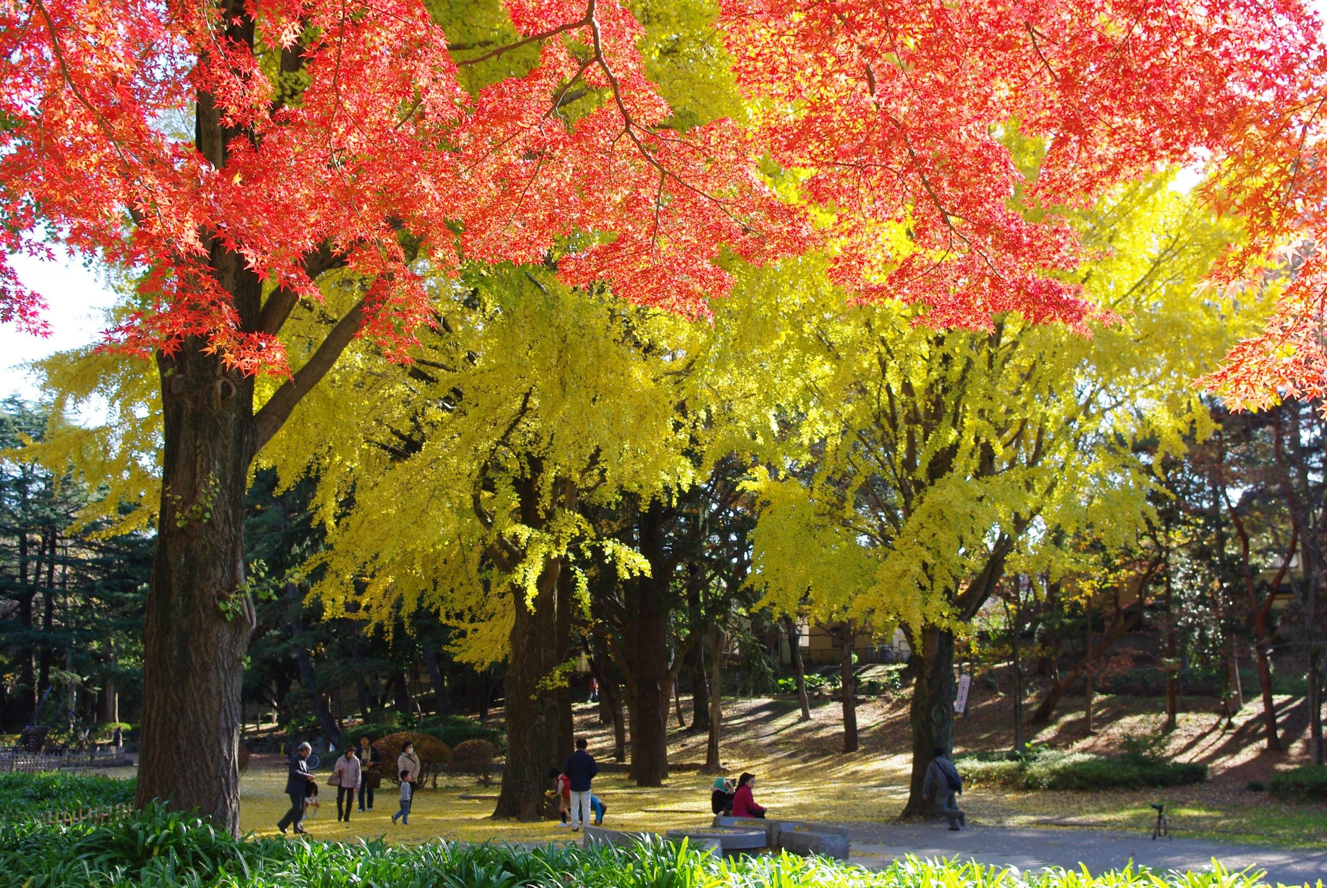 千葉公園 紅葉観賞