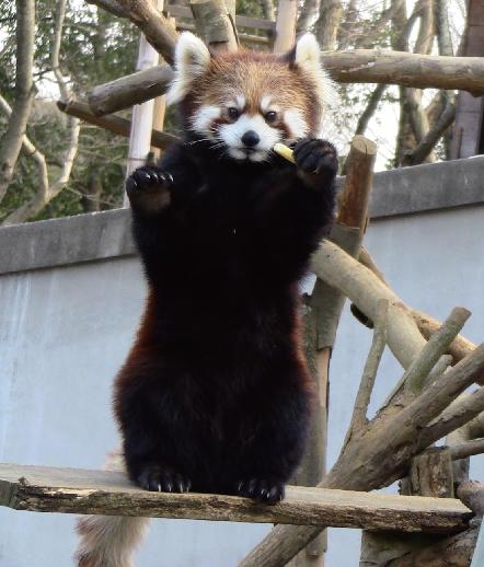千葉あそび~動物公園「七福の縁起アニマル」で開運祈願さんぽ