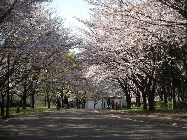 青葉の森公園バーベキュー場オープン!<11/8(日)まで>