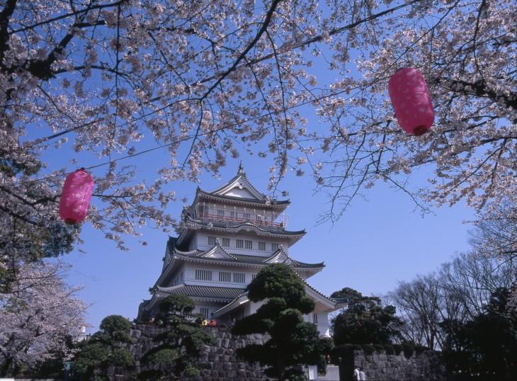 参加者募集!桜めぐりサイクリング@中心市街地界隈<3/26(日)>
