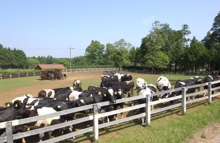 30乳牛育成牧場
