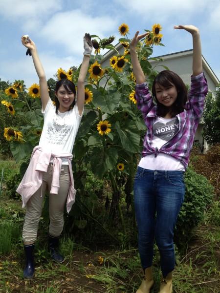 【千葉市のひまわりはもう咲いている!】