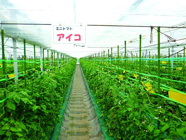 322_フルーツランドまーちゃん農場