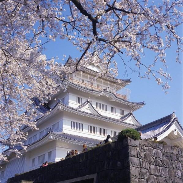「第19回千葉城さくら祭り」中止のお知らせ