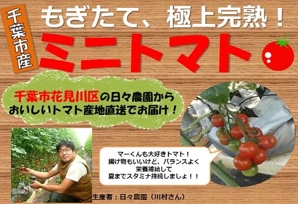 日々農園ミニトマト
