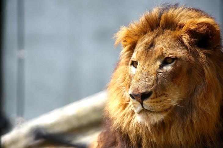 千葉市動物公園にライオンがやてきた!ふれあい動物の里もついにオープン!<4/28(木)>