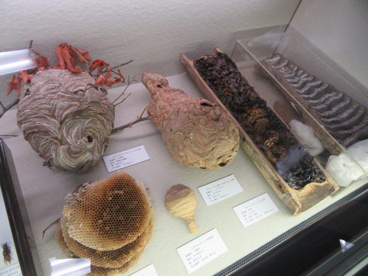 △インドネシアや台湾の蜂の巣も札幌市や千葉市で採集されたものと並んで展示されていました。