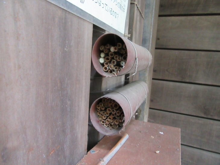 △オリエンテーションハウスの建物の外側にセットされている竹筒の中には作りかけの蜂の巣を観察することができました。