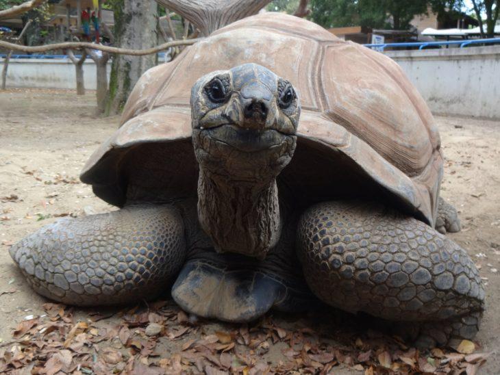 11月の飼育係によるお楽しみDAY☆カメ編@千葉市動物公園<11/12(土)>