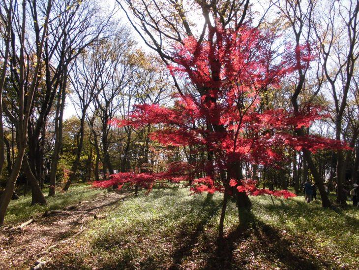 そんのう・森のお祭り@園生の森公園<12/10(土)>