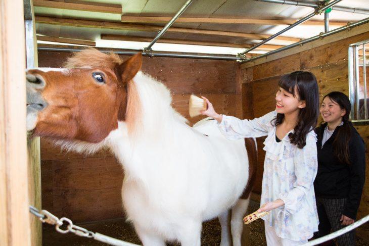 △ブラッシングの強さも馬の好みがあるので、小泉さんに教わりながら毛並みを整えます。