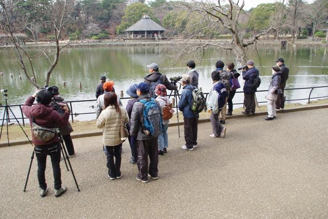 鳥のイラストレーターが教える冬鳥観察の楽しみ方@千葉公園<2/4(土)>