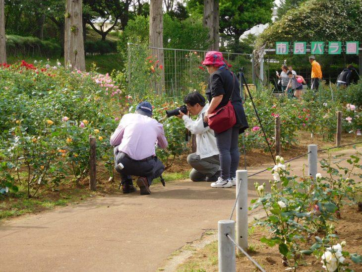 花の写真講座(春)~全4回~@千葉市都市緑化植物園<4/23(日)~6/11(日)>