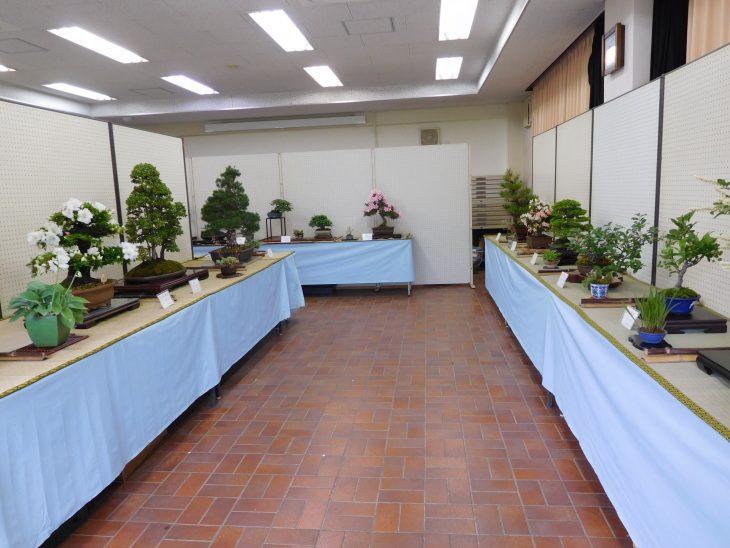 春の盆栽作風展@都市緑化植物園<5/26(金)~28(日)>