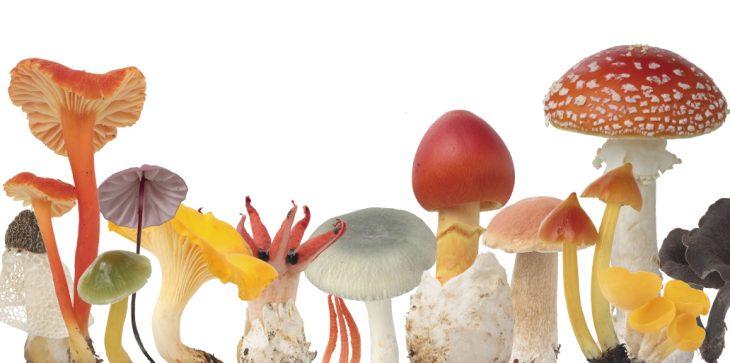 企画展「きのこワンダーランド2期」@千葉県立中央博物館<9/16(土)~12/27(水)>