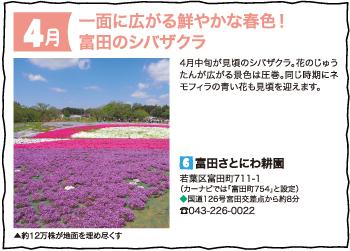一面に広がる鮮やかな春色!富田のシバザクラ