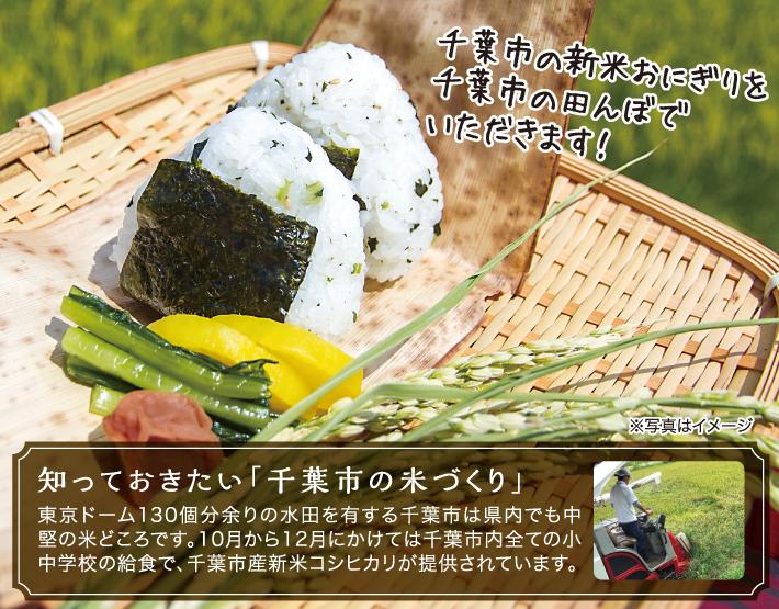 知っておきたい「千葉市の米づくり」   東京ドーム130個分余りの水田を有する千葉市は県内でも中堅の米どころです。10月から12月にかけては千葉市内全ての小中学校の給食で、千葉市産新米コシヒカリが提供されています。