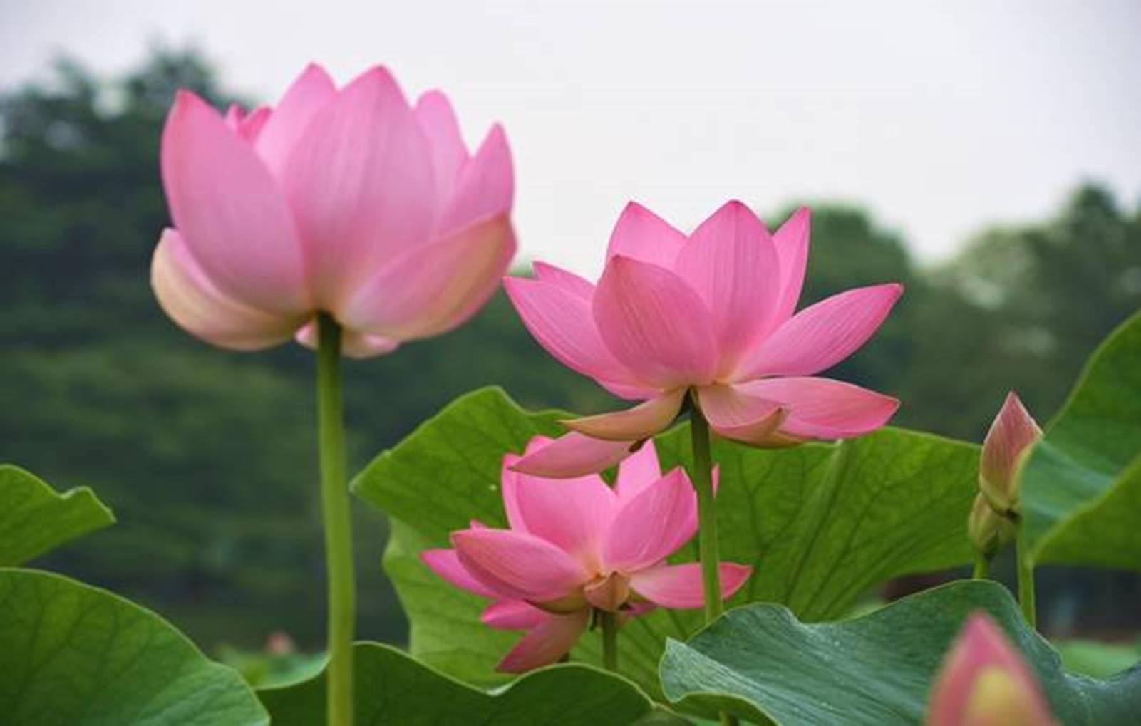6月の花に咲く花の5 千葉市観光協会公式サイト千葉市観光ガイド