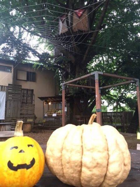 ツリーハウスの森カフェ「椿森コムナ」~ハロウィン仕様に変化した異空間へ~