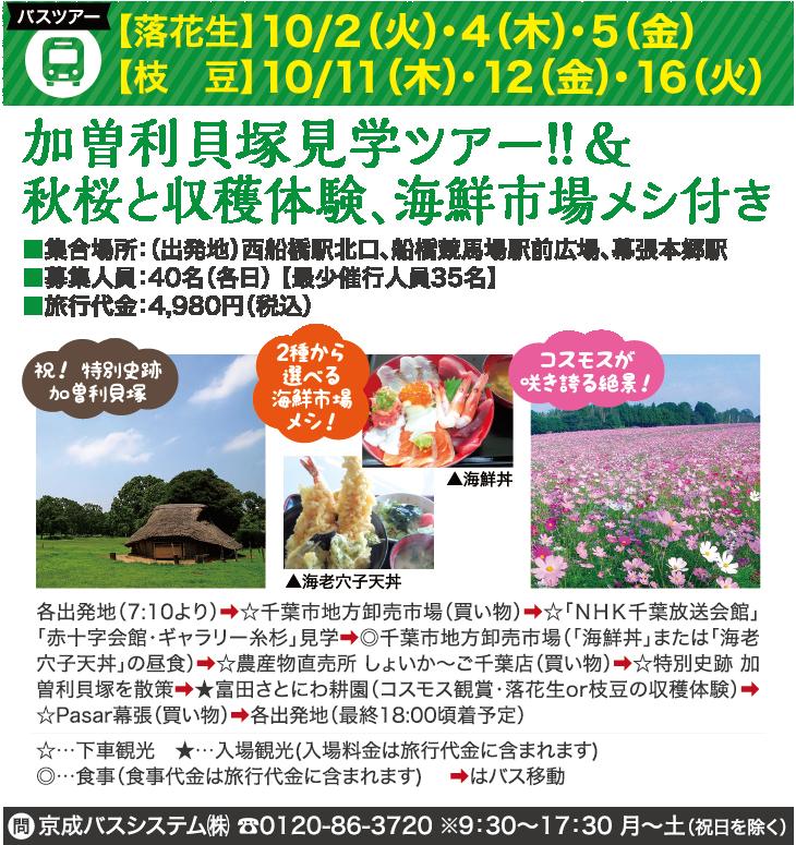 加曽利貝塚見学ツアー!!&秋桜と収穫体験、海鮮市場メシ付き