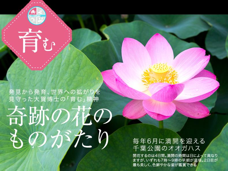 発見から発育、世界への拡がりを見守った大賀博士の「育む」精神奇跡の花のものがたり