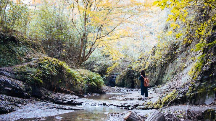 「Wakami-hara(わかみはら)~あなたに、いちばん近い里山へ。~」オープン!!