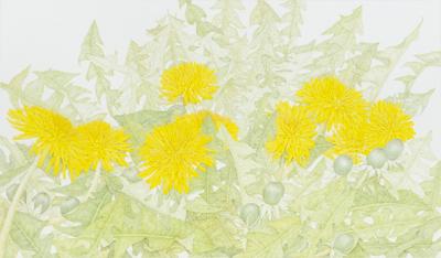 ブラティスラヴァ世界絵本原画展@千葉市美術館<1/20(日)~3/3(日)>