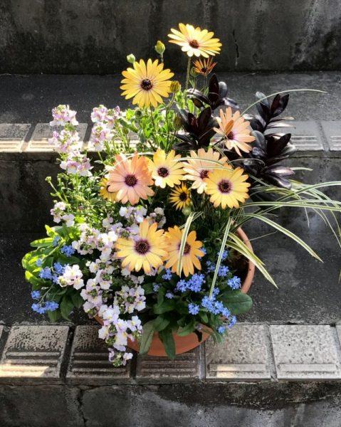 花と緑の人気講座!3月開催@幕張海浜公園<3/31(日)>