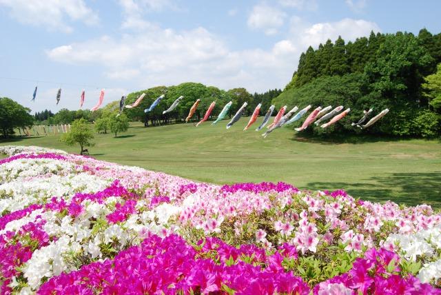 昭和の森【5万株のツツジ】がGWに見頃を迎えます。