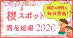 千葉City桜スポット開花速報2020