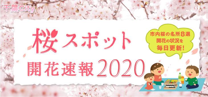 桜スポット開花速報2020 市内桜の名所8選 開花の状況を毎日更新!
