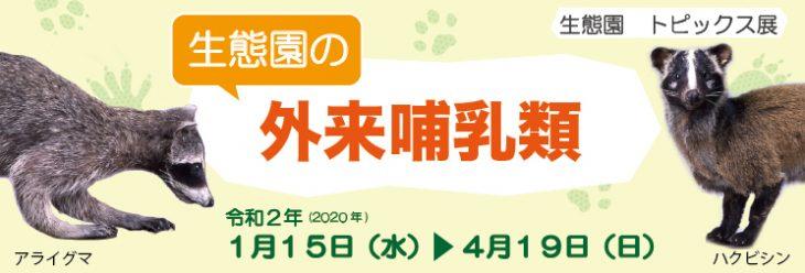 【休止中】生態園トピックス展「生態園の外来哺乳類」@千葉県立中央博物館、生態園<1/15(水)~4/19(日)>