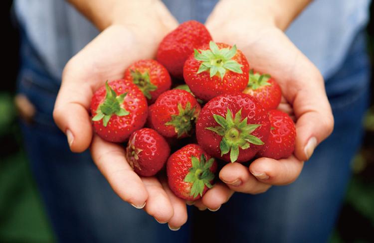 ▲減農薬栽培により安心・安全・美味を実現したイチゴをとくとご賞味あれ!