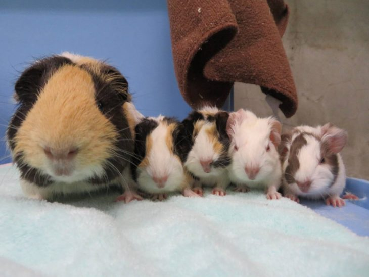 「ねずみちず」を持ってネズミ詣に出掛けよう!@千葉市動物公園<1/3(金)~5(日)>