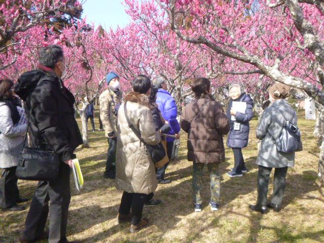 早春のお花見会 ~ウメ観賞会~@青葉の森公園<2/15(土)>
