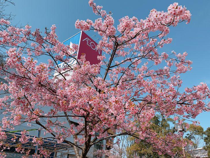 マリンピア河津桜写真展開催と写真募集のお知らせ