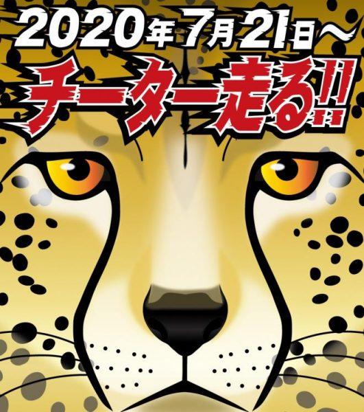 チーター走る!!@千葉市動物公園<7/21(火曜)>