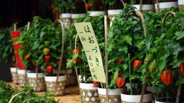 検見川神社 例祭神幸祭・ほおづき市@検見川神社<8/1(土曜)~3(月曜)>