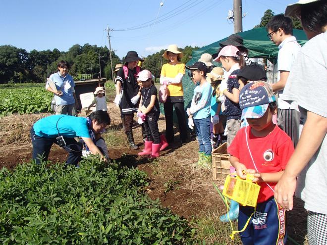 親子1日農家体験「落花生を学んで、掘って、食べる!」@千葉市緑区平川町の畑<9/26(土曜)・27(日曜)>