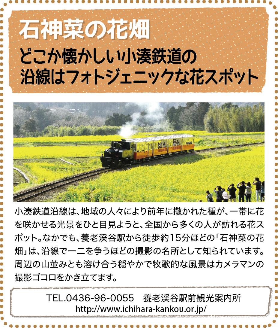 観光情報04