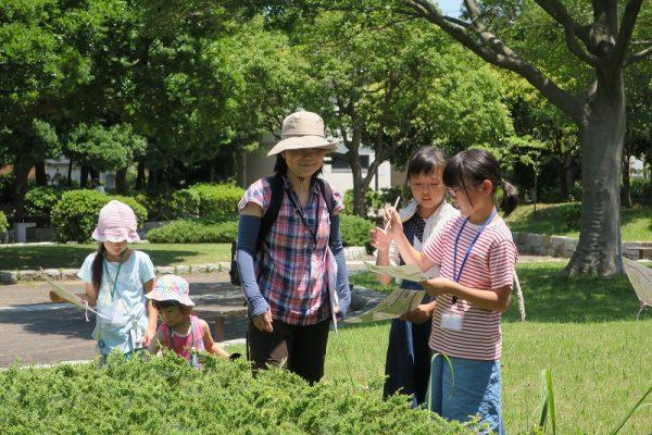 初夏の身近な生き物観察会@幕張海浜公園<6/27(日曜)>