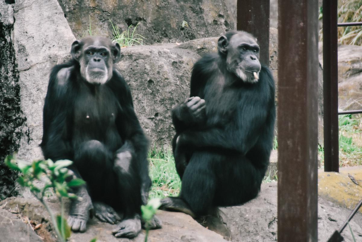 千葉市動物公園のサル