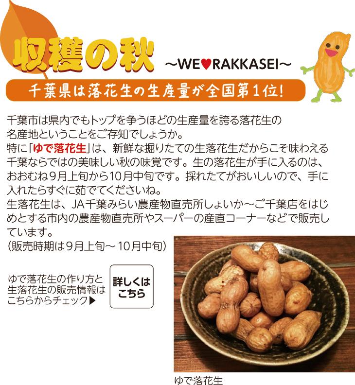 [収穫の秋]千葉県は落花生の生産量が全国第1位